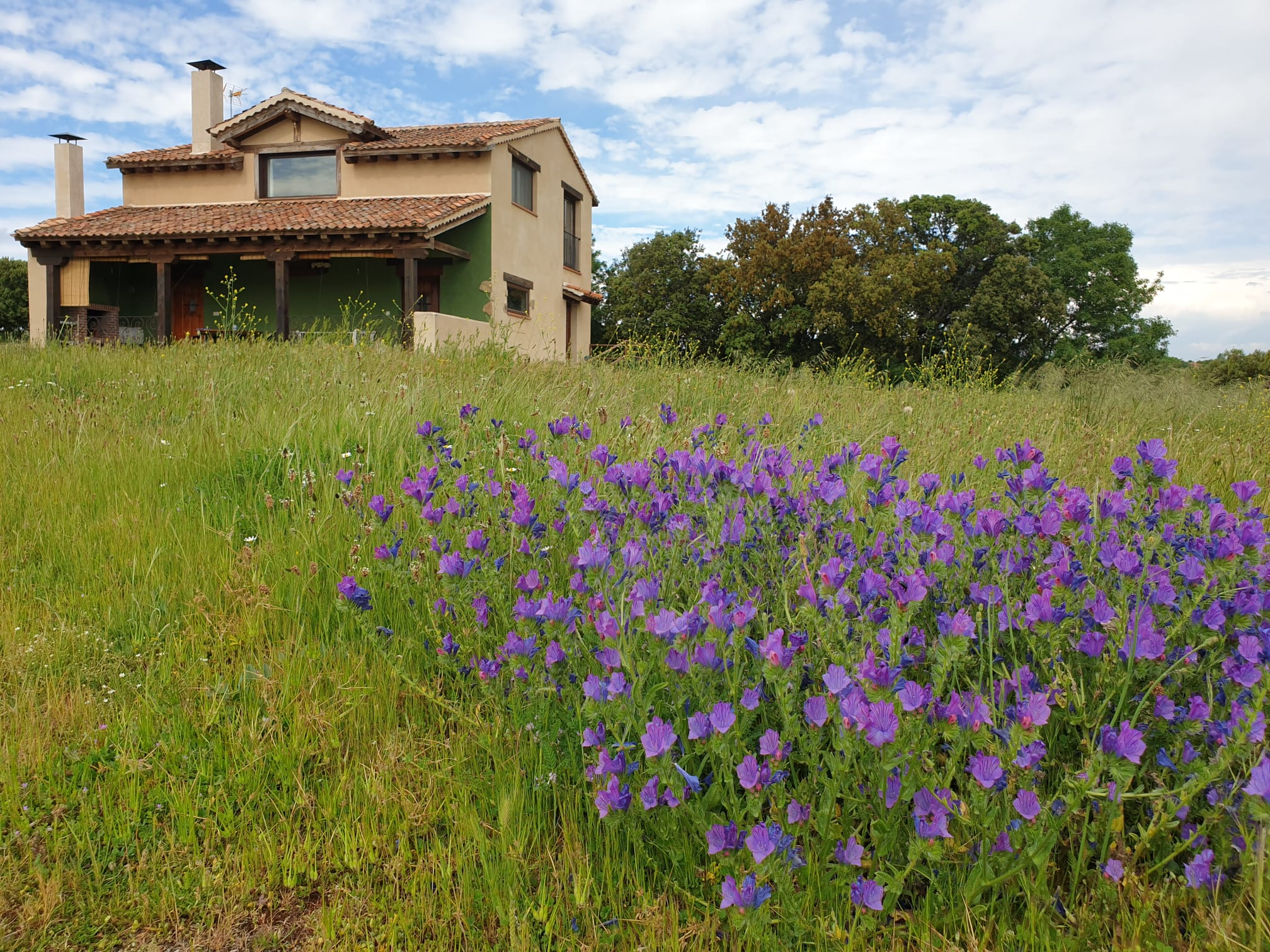 Casa y flores